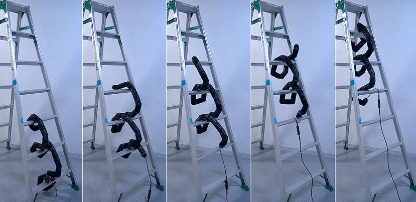 Робота-змею научили подниматься по стремянке