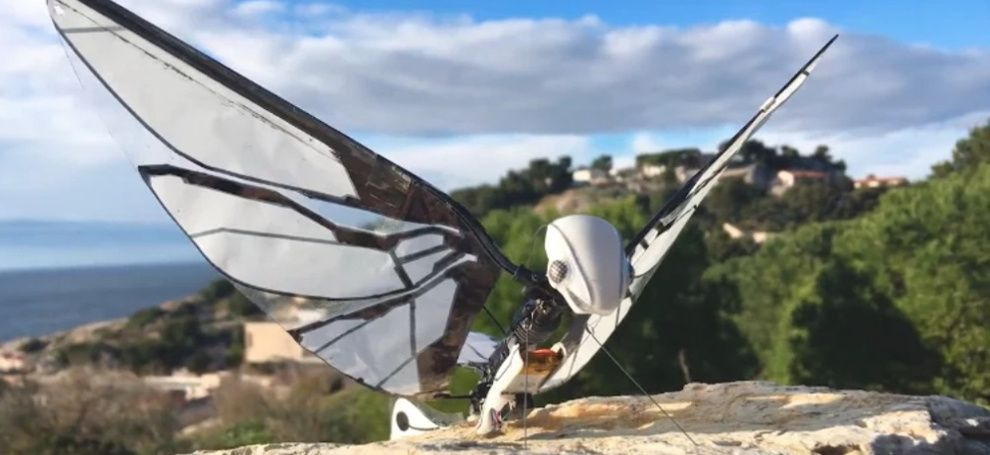 Биоробот MetaFly покорил Kickstarter