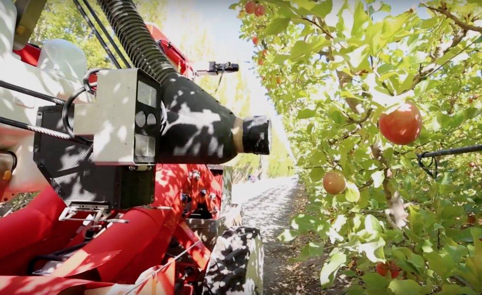 Новый робот собирает яблоки в Новой Зеландии